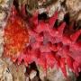 Pepino Areia Black