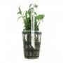 Planta n hygrophyla balsamica tk