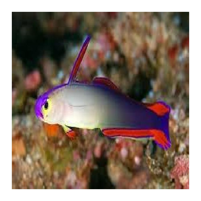 Goby Fire Fish Purple