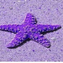 Estrela comet pale purple
