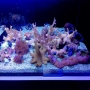 Coral Muda Soft Diversas