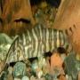 Botia Tigre Pq