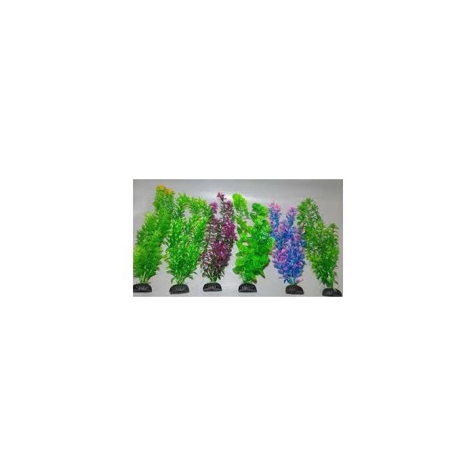 Planta Art Soma Anubia