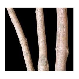 Mangrove Replica I 48x34x46 Cm
