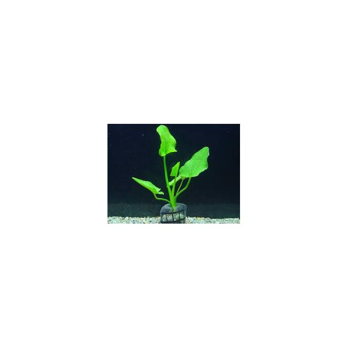 Planta N Echinodorus Macrophyllus Tk