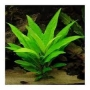Planta N Hygrophila Rio