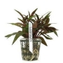 Planta N Ludwigia Glandulosa Tk
