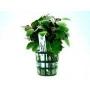 Planta N Mini Lobelia Tk